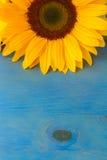 Un girasole dell'ansa fotografia stock libera da diritti