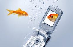 Un goldfish nage par un téléphone portable Images libres de droits