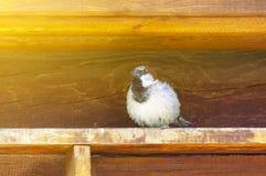 Un gorrión se sienta en un edificio de madera viejo debajo del visera del tejado imagen de archivo libre de regalías