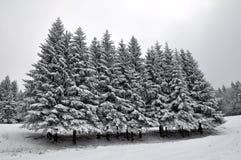 Un goup de árboles Fotografía de archivo libre de regalías