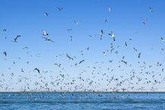 Un gran número de gaviotas que vuelan sobre la superficie del mar. foto de archivo libre de regalías