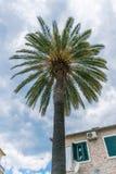 Un gran número de palmas hermosas crecen en la ciudad vieja Fotos de archivo libres de regalías