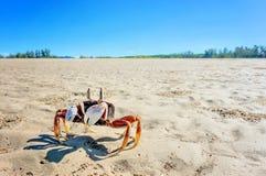 Un granchio sulla sabbia Immagine Stock Libera da Diritti