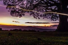 Un grand arbre à un camping photo libre de droits
