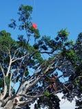 Un grand arbre étant taillé Photographie stock