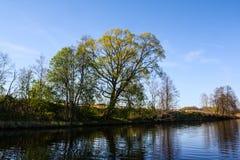 Un grand arbre au-dessus de l'eau de la rivière photos libres de droits