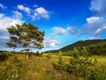 Un grand arbre branchu dans un bel endroit naturel Images stock