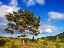 Un grand arbre branchu dans un bel endroit naturel Images libres de droits