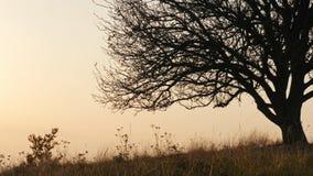 Un grand arbre dans le pré d'automne clips vidéos