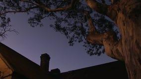 Un grand arbre fantasmagorique et une maison banque de vidéos