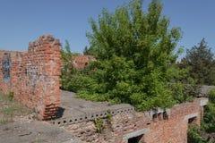 Un grand arbre se d?veloppe par un immeuble de brique rouge abandonn? photos stock