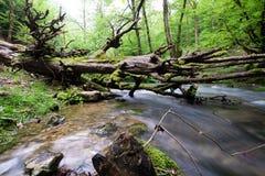 Un grand arbre tombé dans la rivière photos libres de droits