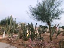 Un grand beau jardin de cactus épineux vert mexicain, arbres exotiques, usines, tropicales dans les pays chauds secs arides, dése photographie stock
