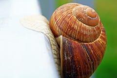 Un grand bel escargot rampe rapidement hors du cadre, la maison du ` s d'escargot est plan rapproché de tir, et dans le bokeh de  photo stock
