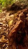 Un grand bois sur la forêt Photographie stock libre de droits