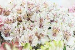 Un grand bouquet des alstroemerias blancs dans un fleuriste est vendu sous le nom de boîte-cadeau Le marché du ` s d'agriculteur  Photos stock