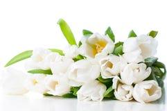 Grand bouquet des tulipes blanches humides Photo libre de droits