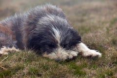 Un grand chien dans l'herbe photographie stock libre de droits