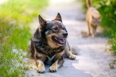 Un grand chien et un chat rouge dans la cour Image libre de droits