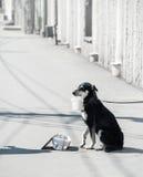 Un grand chien noir priant se reposer sur la rue avec un seau dans des ses dents sur la rue un jour ensoleillé en été photographie stock