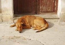 Petit somme de chien Photos stock