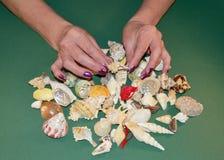 Un grand choix de coquilles de mer Photo libre de droits