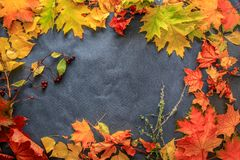 Un grand choix de feuilles d'automne des brindilles et des baies présentées sur l'obscurité photo stock