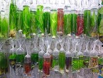 Un grand choix de plantes aquatiques ornementales commerciales Photos libres de droits