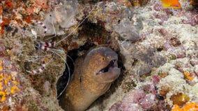 Un grand choix de poissons et de créatures sous-marins en Maldives Photo stock