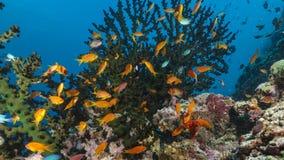 Un grand choix de poissons et de créatures sous-marins en Maldives Images libres de droits