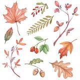 Un grand ensemble d'illustrations d'aquarelle avec des feuilles d'automne photographie stock libre de droits