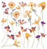 Un grand ensemble de ressort a séché et a pressé des fleurs Herbier de belles fleurs multicolores illustration stock