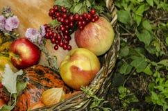 Un grand fond pour faire des cartes de voeux le jour de thanksgiving Photos stock