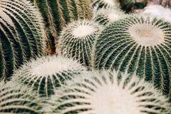 Un grand groupe de cactus images libres de droits