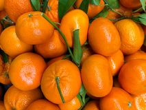 Un grand groupe de petites oranges et de vignes vertes Photographie stock libre de droits