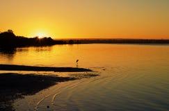 Un grand h?ron appr?ciant le chaud du lever de soleil photos stock