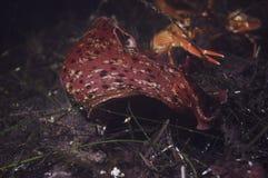 Un grand lièvre de mer Photos stock
