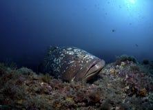 Un grand poisson sort sur la roche Images stock