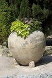 Un grand pot Photos stock
