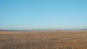 Un grand pré ou champ avec l'herbe sèche contre un ciel bleu banque de vidéos
