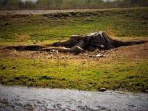Un grand tronçon d'un vieil arbre sur la berge photo libre de droits