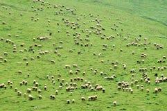 Un grand troupeau de moutons sur un flanc de coteau photographie stock libre de droits