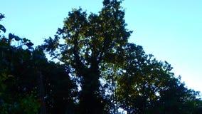 Un grande albero immagini stock