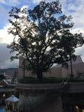 Un grande albero immagine stock
