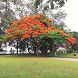 un grande albero di due toni Fotografie Stock Libere da Diritti