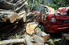 Un grande albero di gomma è caduto inatteso su un'automobile rossa parcheggiata un giorno calmo e soleggiato Fotografie Stock