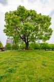 Un grande albero nella città di kumamoto Immagini Stock Libere da Diritti