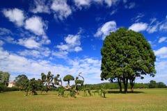 Un grande albero sotto cielo blu fotografia stock libera da diritti