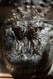 Un grande alligatore pericoloso Fotografie Stock Libere da Diritti