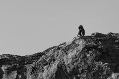Un grande babbuino maschio si siede su alta roccia all'allerta per il pericolo Immagine Stock